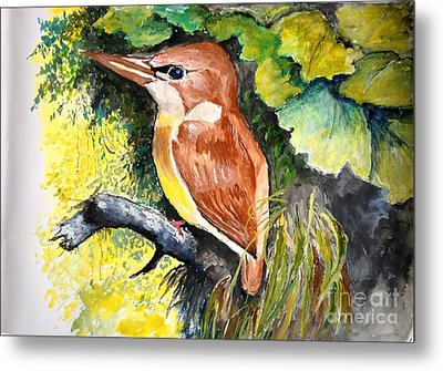 Rofous - Backed Kingfisher  Metal Print