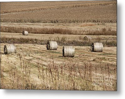 Roll On The Hay Metal Print by Taschja Hattingh