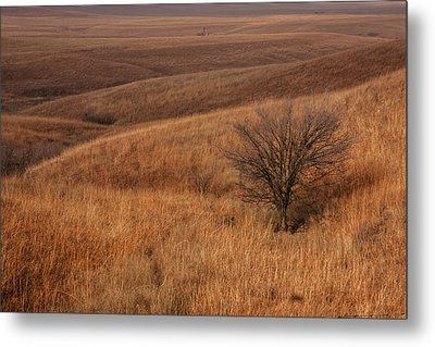 Rolling Hills Metal Print by Scott Bean