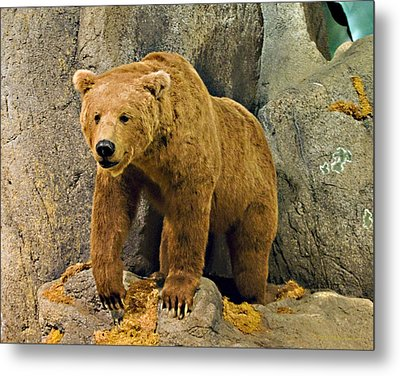 Rolling Hills Wildlife Adventure 1 Metal Print by Walter Herrit
