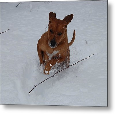 Metal Print featuring the photograph Romp In The Snow by Mim White
