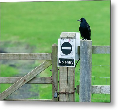 Metal Print featuring the photograph Rook On Guard by Avian Resources