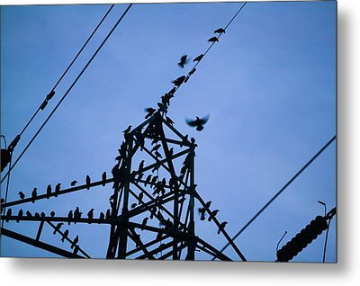 Rooks And Jackdaws At Sunset Metal Print