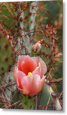 Metal Print featuring the photograph Rooney's Prickly Pear by Cindy McDaniel