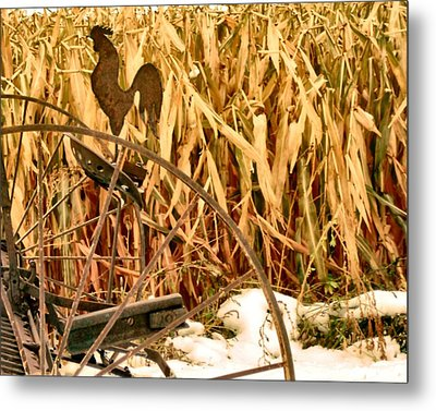Rooster 1 Metal Print by Larry Campbell