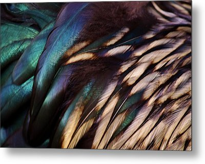 Rooster Feathers Metal Print by Paulette Thomas