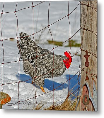 Rooster George Metal Print by Denise Romano
