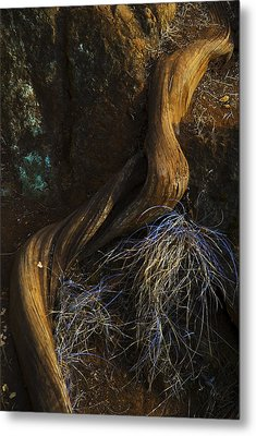 Tree Root Metal Print by Yulia Kazansky