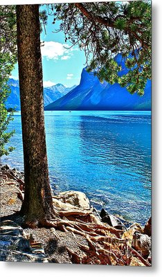 Metal Print featuring the photograph Rooted In Lake Minnewanka by Linda Bianic