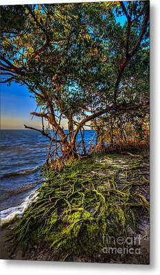Rooted In Truth Metal Print