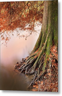 Roots Metal Print by Alfio Finocchiaro