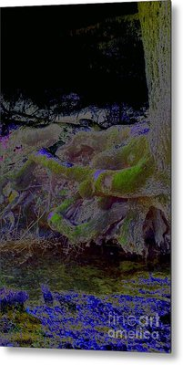 Metal Print featuring the photograph Roots by Karen Newell
