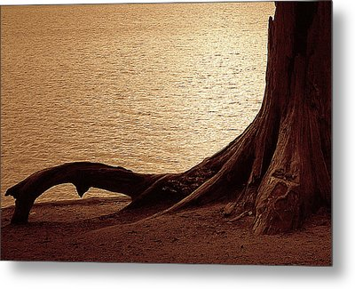 Roots Metal Print by Mim White