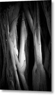 Roots Metal Print by Nancy Edwards