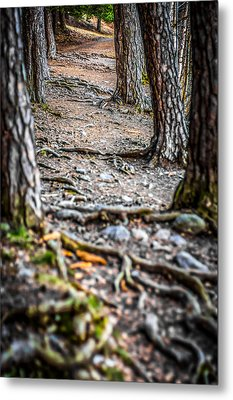 Metal Print featuring the photograph Rootway by Matti Ollikainen
