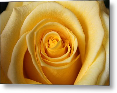 Metal Print featuring the photograph Rosa by Silke Brubaker
