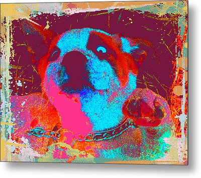 Rosco Belly Up Metal Print by Erica  Darknell