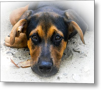 Rosco  Metal Print by Christy Usilton