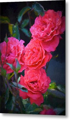 Rose 138 Metal Print by Pamela Cooper