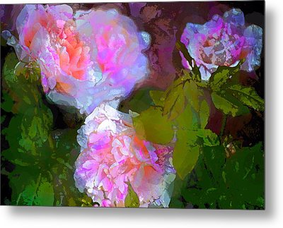 Rose 184 Metal Print by Pamela Cooper