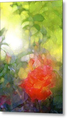 Rose 190 Metal Print by Pamela Cooper
