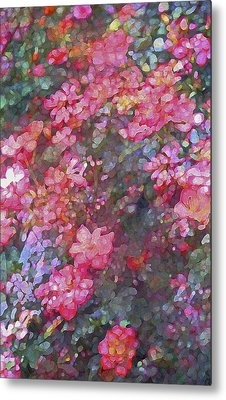 Rose 199 Metal Print by Pamela Cooper