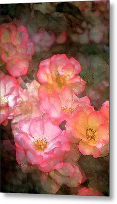 Rose 212 Metal Print by Pamela Cooper