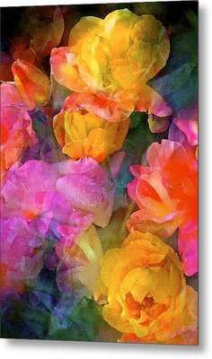 Rose 224 Metal Print by Pamela Cooper