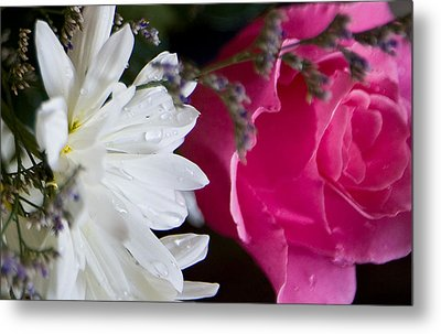 Rose And Daisy Metal Print by John Holloway