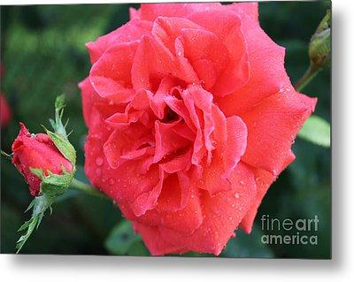 Rose And Rose Bud Metal Print by Judy Palkimas