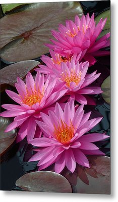 Rose Arey Metal Print