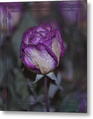 Metal Print featuring the photograph Rose Beauty After by Sandra Foster