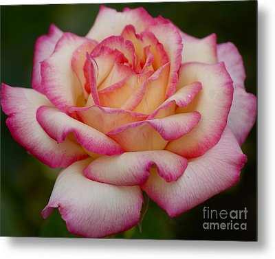 Metal Print featuring the photograph Rose Beauty by Debby Pueschel