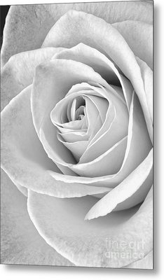 Rose Black And White Metal Print