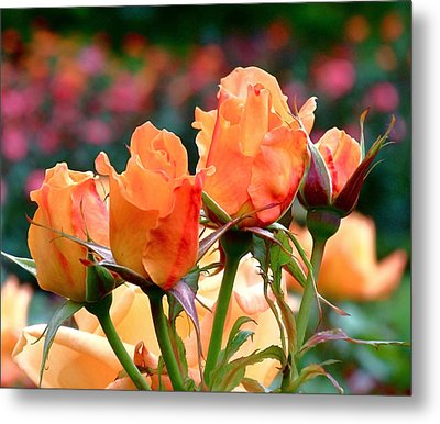 Rose Bunch Metal Print by Rona Black