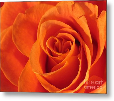 Metal Print featuring the photograph Rose Close Up by Art Photography