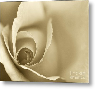 Rose Close Up - Gold Metal Print by Natalie Kinnear