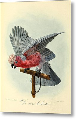 Rose Cockatoo Metal Print by Dreyer Wildlife Print Collections