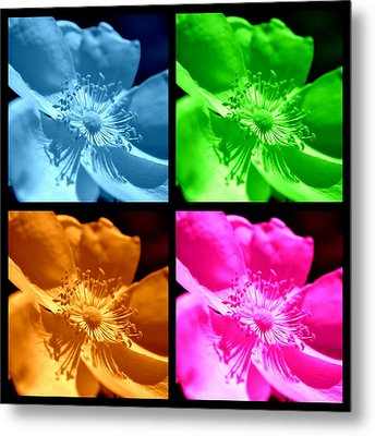 Metal Print featuring the photograph Rose Collage by Kelly Nowak
