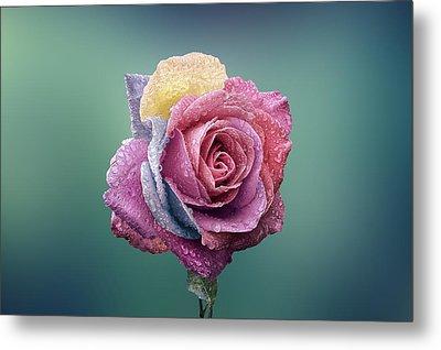 Rose Colorful Metal Print by Bess Hamiti