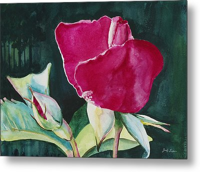 Rose Coming To Life Metal Print by Judy Loper