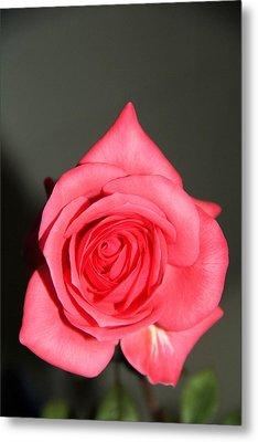Rose Metal Print by Dan Sproul