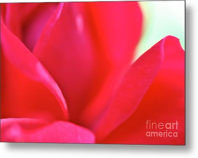 Rose Essence Study 2 Metal Print by Cathy Dee Janes