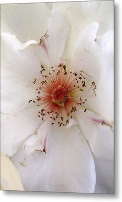 Rose Flower Metal Print by Joyce Woodhouse