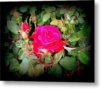 Rose Garden Centerpiece Metal Print by Pamela Hyde Wilson
