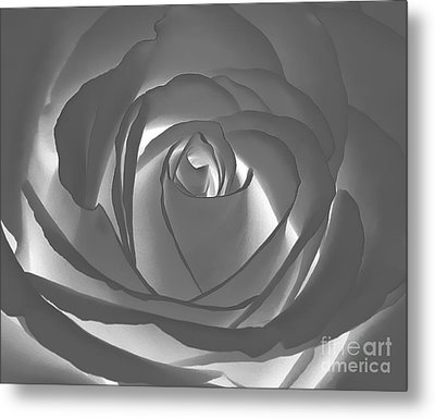 Metal Print featuring the photograph Rose by Geraldine DeBoer