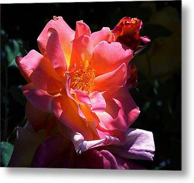 Rose Glow Metal Print by Rona Black