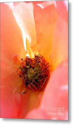 Metal Print featuring the photograph Rose Heart by Rebeka Dove