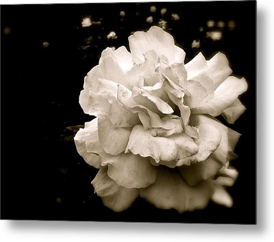 Rose I Metal Print by Kim Pippinger