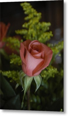 Rose In Bloom Metal Print